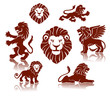 A set of lions illustrations