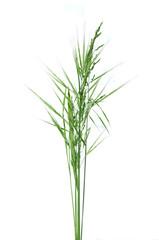 brins d'herbe