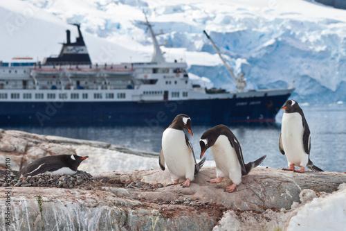 Papiers peints Pingouin Eselspinguine (pygoscelis papua) vor Kreuzfahrtschiff