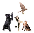 Group of animals together on the white background