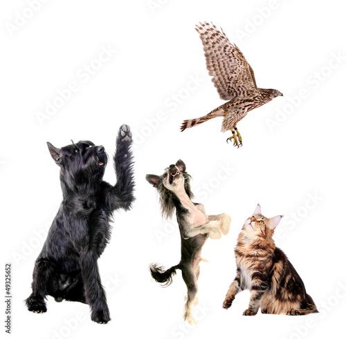 Fototapeten,avian,vögel,schwarz,braun