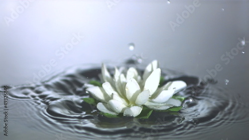 Lilypad falling in water