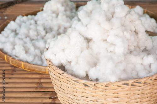 Ripe cotton bolls