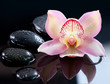 Spa Stones and Orchid Flower over Dark Background
