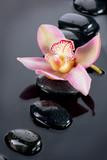 Fototapete Orchidee - Blume - Blume