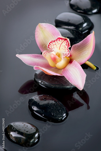 Spa Stones and Orchid Flower over Dark Background - 49329645