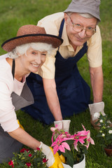 Retired couple gardening together portrait