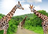Fototapete Afrikakarte - Tier - Säugetiere