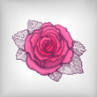 Vector drawing of pink rose