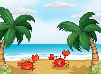 Crabs in the seashore