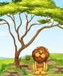 A lion sitting under a big tree