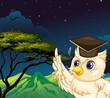 An owl bird