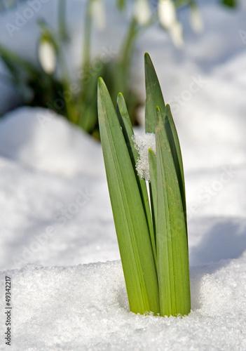 nadchodzi-wiosna