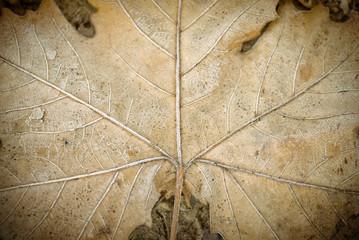 Textura de una hoja seca de arbol