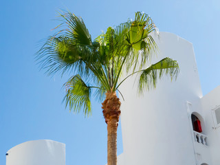 Palm tree in front of whitewashed house