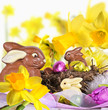 Fröhliche Ostern: Osterhasen und leuchtende Osterglocken