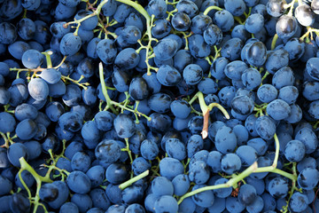 Brush ripe grapes collected