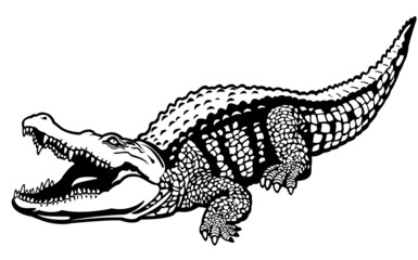 nile crocodile black white