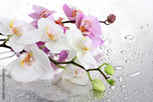 Fototapeten,rosa,weiß,schön,orchidee