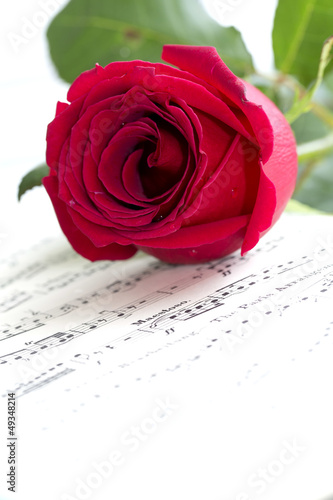 Red rose on musical score
