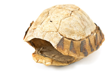 Tortoise   turtle shell