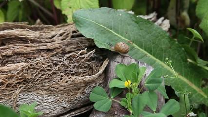 Snail on garden