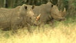 rhino pair in south africa