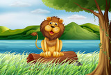 A lion at the riverbank