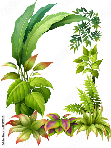 Leafy plants