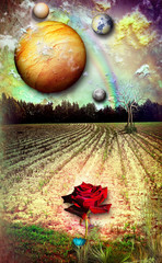 Raimbow and red rose in the field