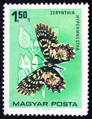Postage stamp Hungary 1966 The Southern Festoon, Butterfly