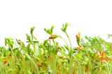 Fototapete Höhe - Natur - Pflanze