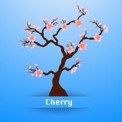 Blooming Sakura tree background