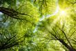Leinwanddruck Bild - Sonnen leuchtet durch Baumkronen