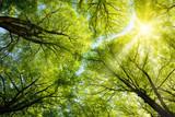Fototapety Sonnen leuchtet durch Baumkronen