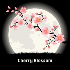 Cherry blossom at night.
