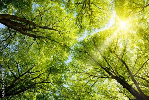 Plakat Sonnen leuchtet durch Baumkronen