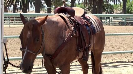 Saddled horse at the manege