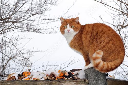 Die Katze auf dem Müllhaufen