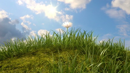 grassy hill with chamomile and ladybird, 3d animation