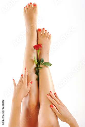 Beutiful woman legs and hands with red rose on white background