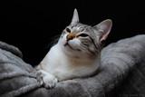 Gato em pose poster