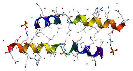 Melittin, the principal active component of apitoxin (bee venom)