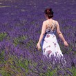 Lavendelfeld mit junger Frau - lavender field and young woman 03