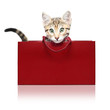 Cute kitten in a red shopping bag