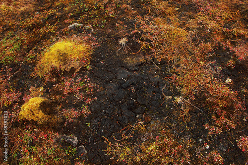 Tundra ground at autumn near Barentsburg, Spitsbergen (Svalbard)