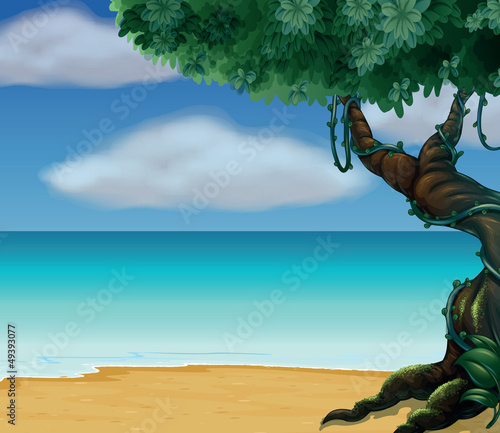 A tree and a beautiful beach