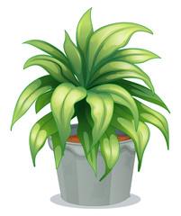 A leafy plant