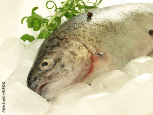Fish in ice, close up