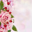garden roses border
